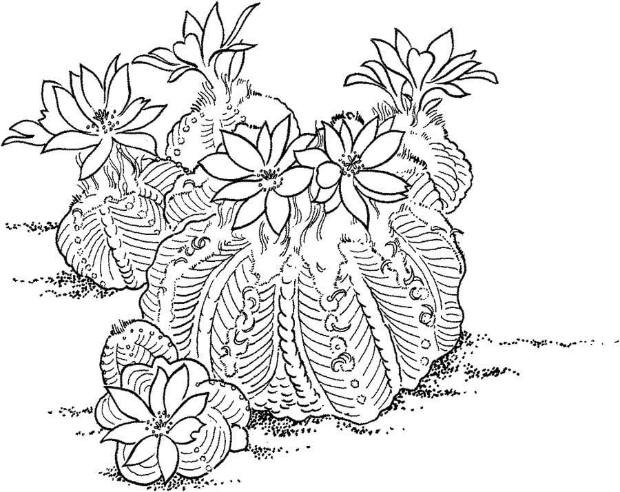 Dibujos para colorear: Cactus imprimible, gratis, para los niños y ...