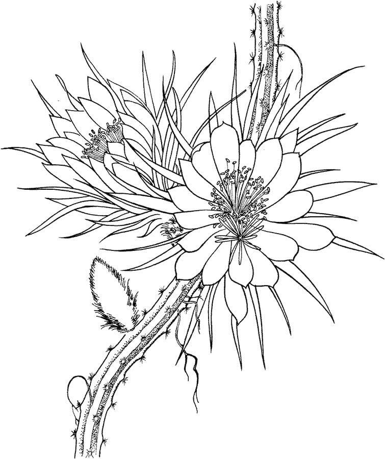 Ausmalbilder: Kaktus zum ausdrucken, kostenlos, für Kinder und ...