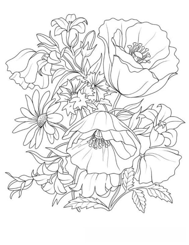 coloring pages for adults plants printable free to download jpg pdf. Black Bedroom Furniture Sets. Home Design Ideas
