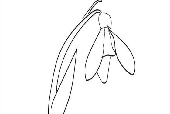 Coloring pages: Snowdrop
