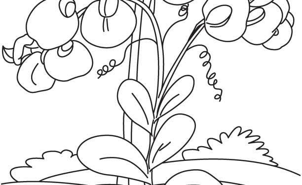 Coloring pages: Sweet pea