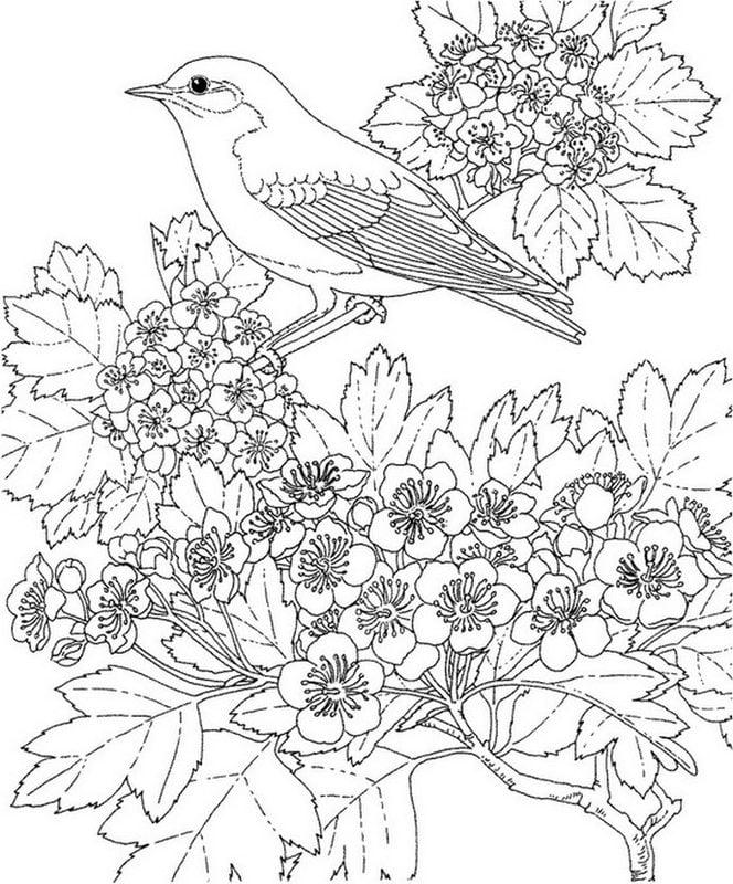 Dibujos para colorear para adultos: Primavera imprimible, gratis ...