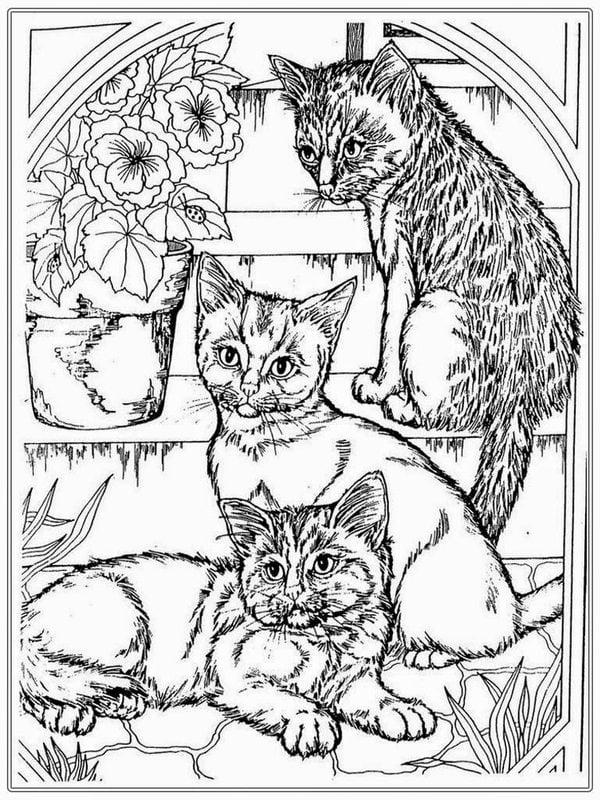 Ausmalbilder Für Erwachsene Katzen Zum Ausdrucken Kostenlos Jpg Pdf