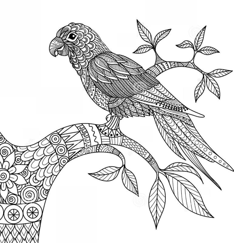 ausmalbilder für erwachsene: papageien zum ausdrucken