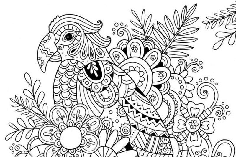 Dibujos para colorear para adultos: Loro imprimible, gratis, JPG, PDF