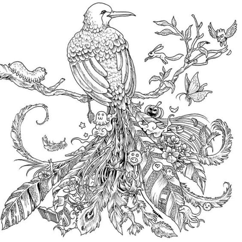 Ausmalbilder Für Erwachsene Vögel Zum Ausdrucken Kostenlos Jpg Pdf