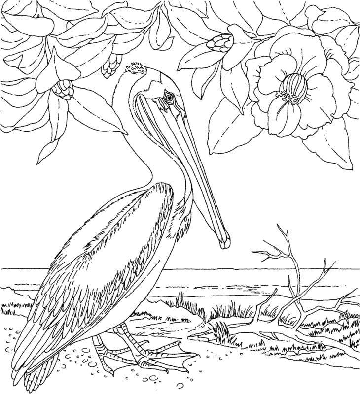 ausmalbilder für erwachsene: vögel zum ausdrucken