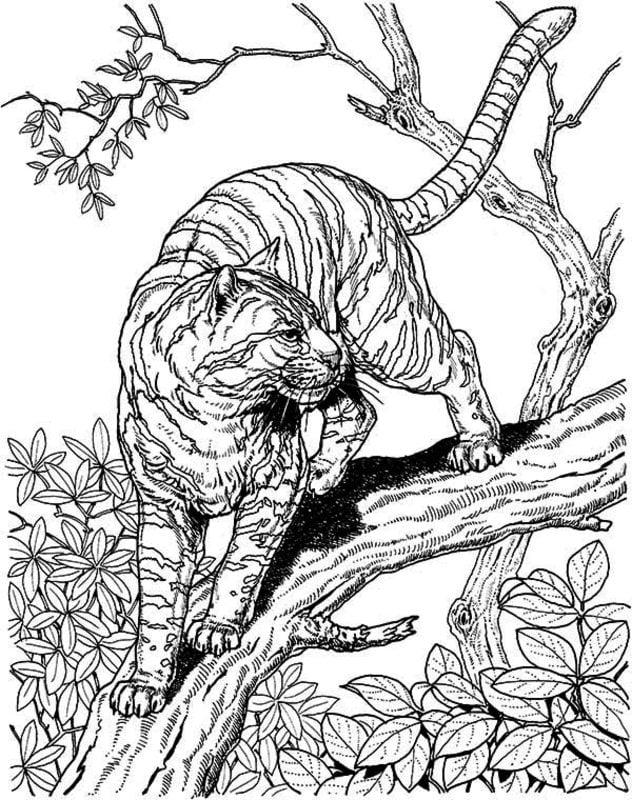 ausmalbilder für erwachsene: tiger zum ausdrucken