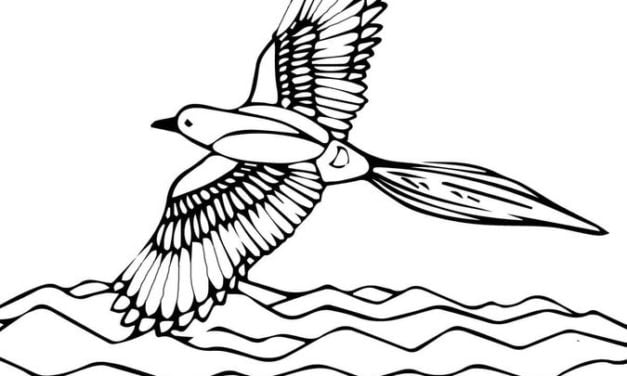 Coloring pages: Magpie