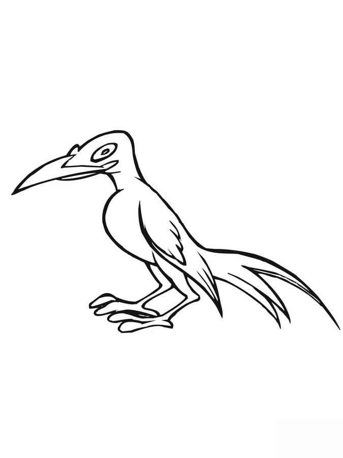 Great Magpie Animals Birds Coloring Pages