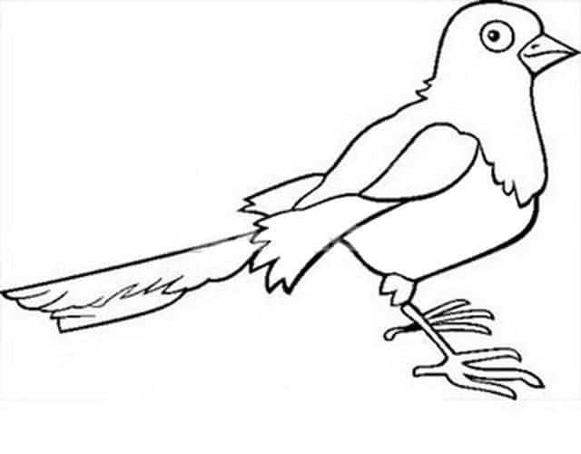 Dibujos para colorear: Urraca imprimible, gratis, para los niños y ...