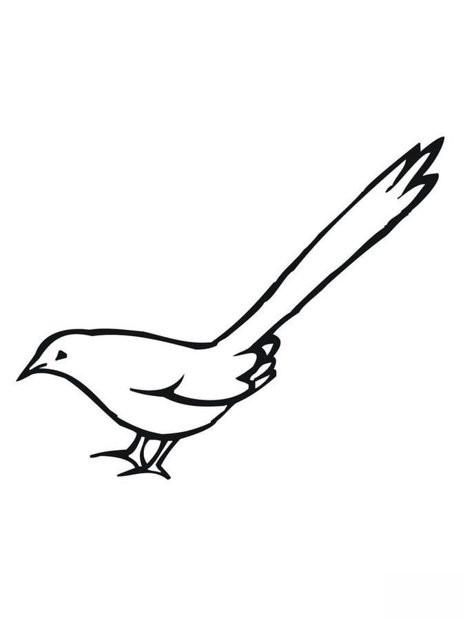 Птичка без хвоста картинка для детей