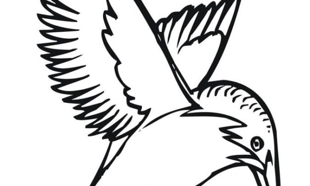 Coloring pages: Kingfisher