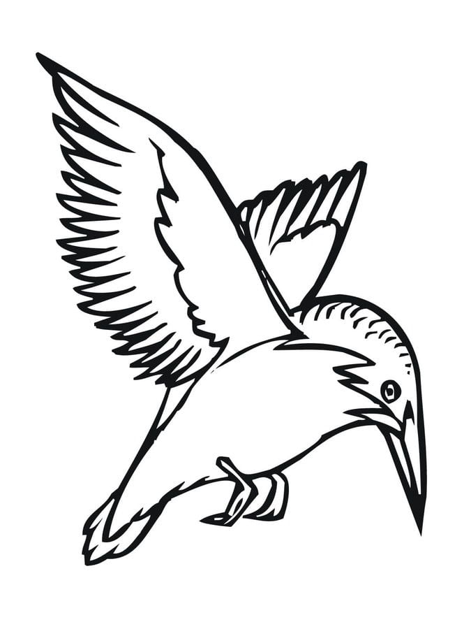 Coloring Pages Coloring Pages Kingfisher Printable For
