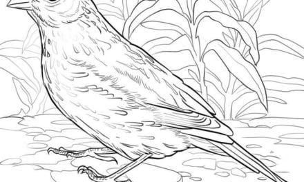 Coloring pages: Lark