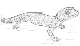 Gekon Nauka rysowania Zwierzęta
