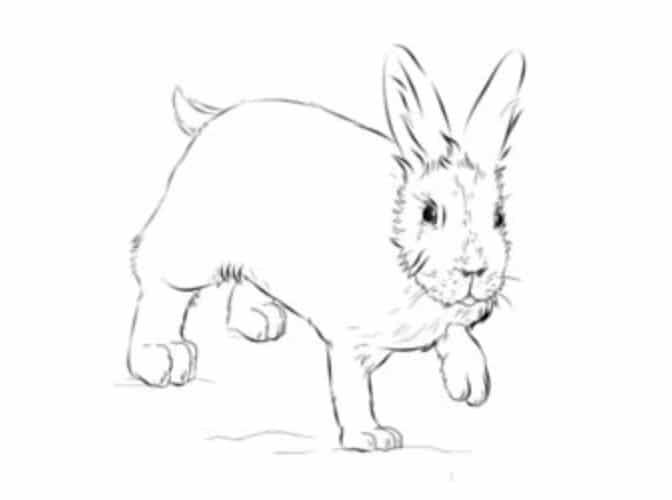 Hase zeichnen schritt f r schritt tutorial f r kinder - Hase zeichnen ...