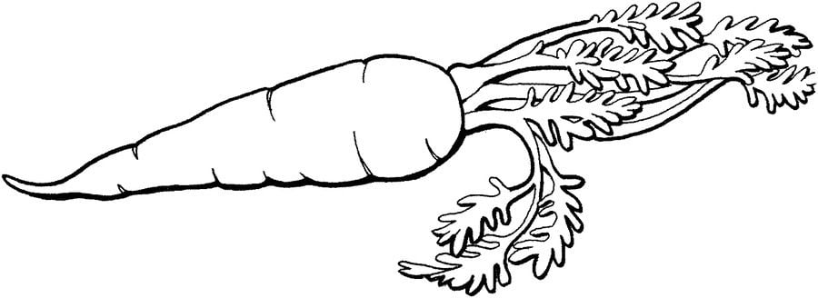 Red carrot coloring page | Download Free Red carrot coloring page ... | 328x900