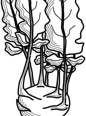 Coloring pages: Kohlrabi