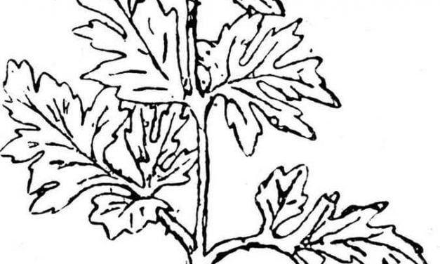 Coloring pages: Parsley