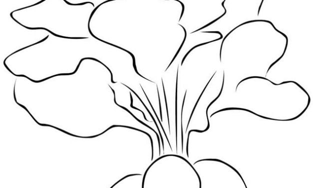 Coloring pages: Radish