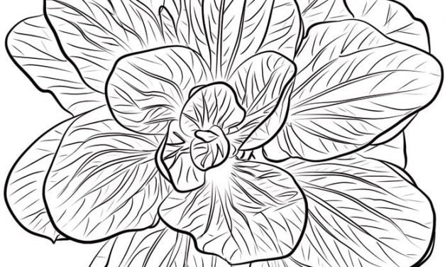 Coloring pages: Spinach