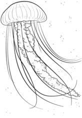 Meduza Nauka rysowania Zwierzęta