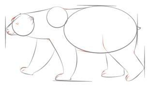 Niedźwiedź polarny Nauka rysowania Zwierzęta