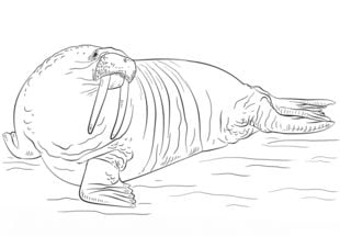 Mors Nauka rysowania Zwierzęta