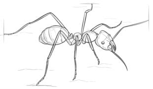 Mrówka Nauka rysowania Zwierzęta