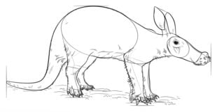 Mrówkojad Nauka rysowania Zwierzęta