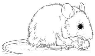 Mysz Nauka rysowania Zwierzęta